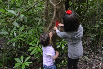 Fairy trail à Templemore park