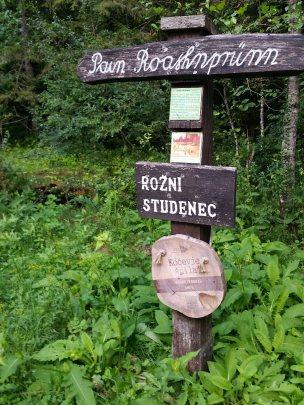 Forêt de Kocevje (1)