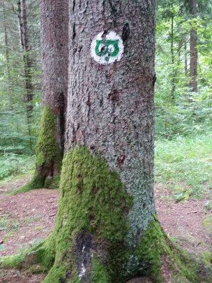 Forêt de Kocevje (2)
