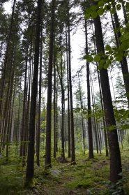 Forêt de Kocevje (3)
