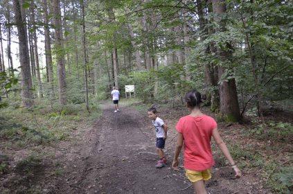 Forêt de Kocevje (4)