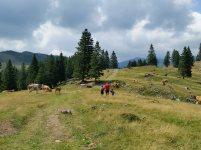 velika planina (8)